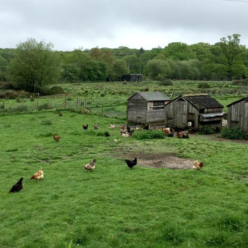 キッチンガーデンの隣にある風景。鶏や豚を放し飼いにしている。放し飼いされている鶏の卵の味は格別